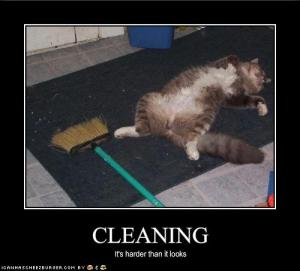 funny-pictures-cleaning-is-very-hard