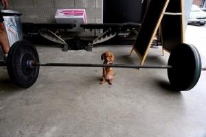 dogbarbell